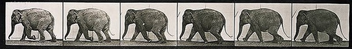 elephant_sequence