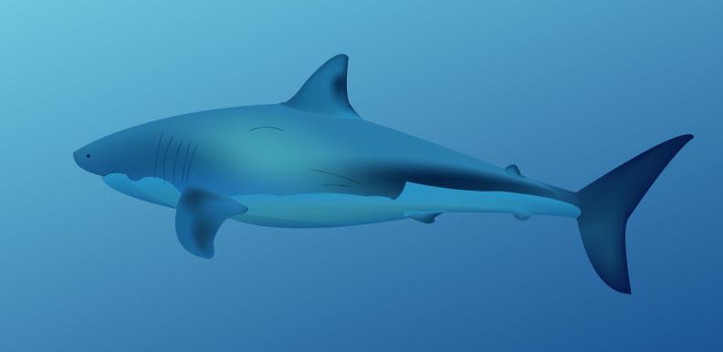CSIERRA-GMESH_Shark