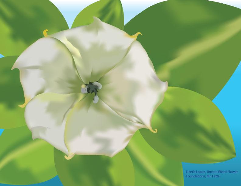 LizethLopezJimson_Weed_Flower