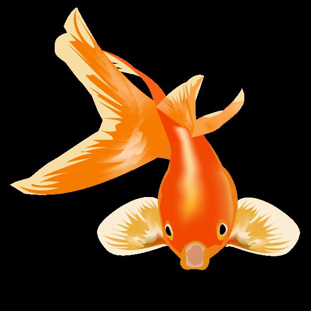 Fish_Goldfish_ThaliaN