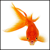 Goldfish_Photo_logo