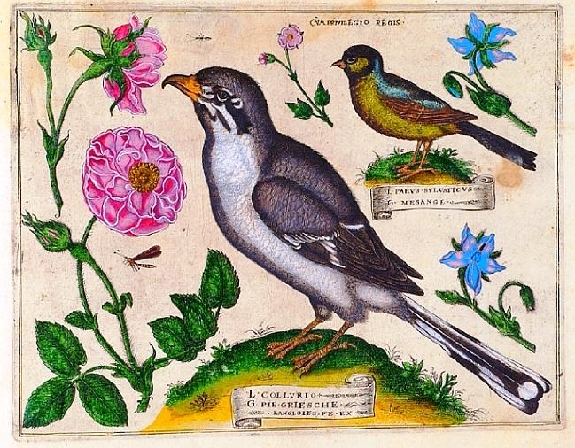 Livres de Fleurs 1620