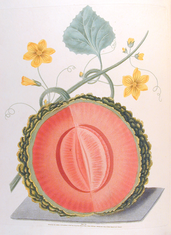 Botanical Illustration George Brookshaw 1817