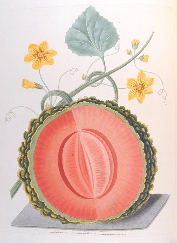Botanical Illustration George Brookshaw 1817