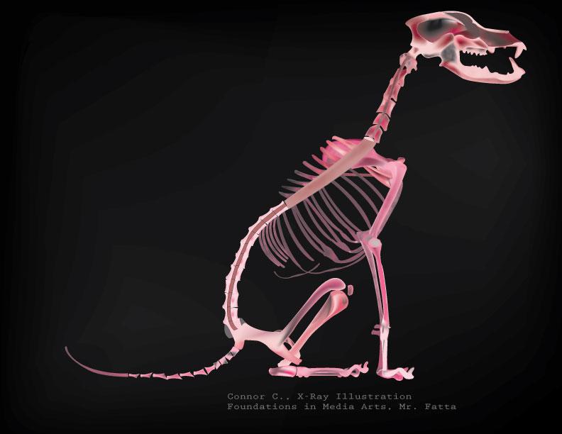 x-ray_dog_CoffeyC_02