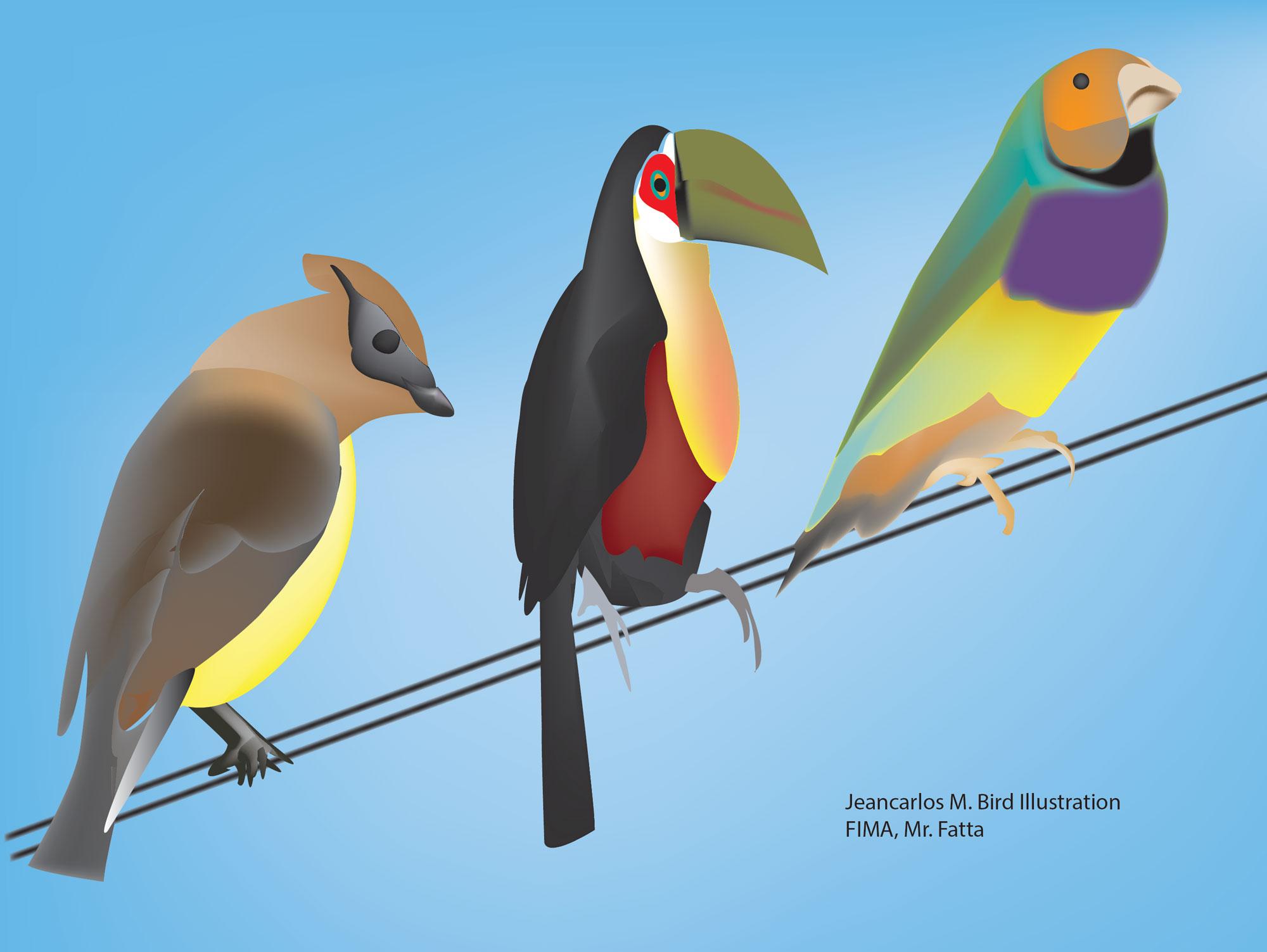 bird_JeanCarlo