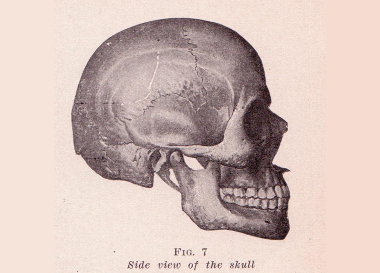 Skull_Side_View
