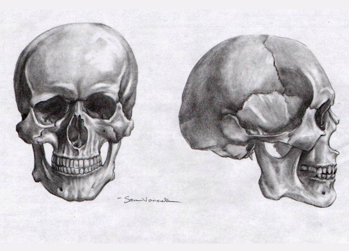 life_drawing___skull_study_by_clownh8tr-d3buour