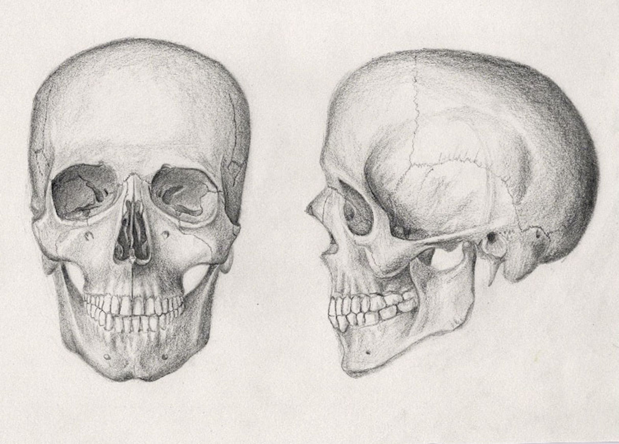pencil_drawing_of_a_human_skull_by_mrpete103-d5jwppa