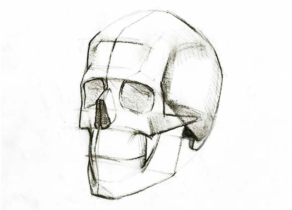 skull-sketch33