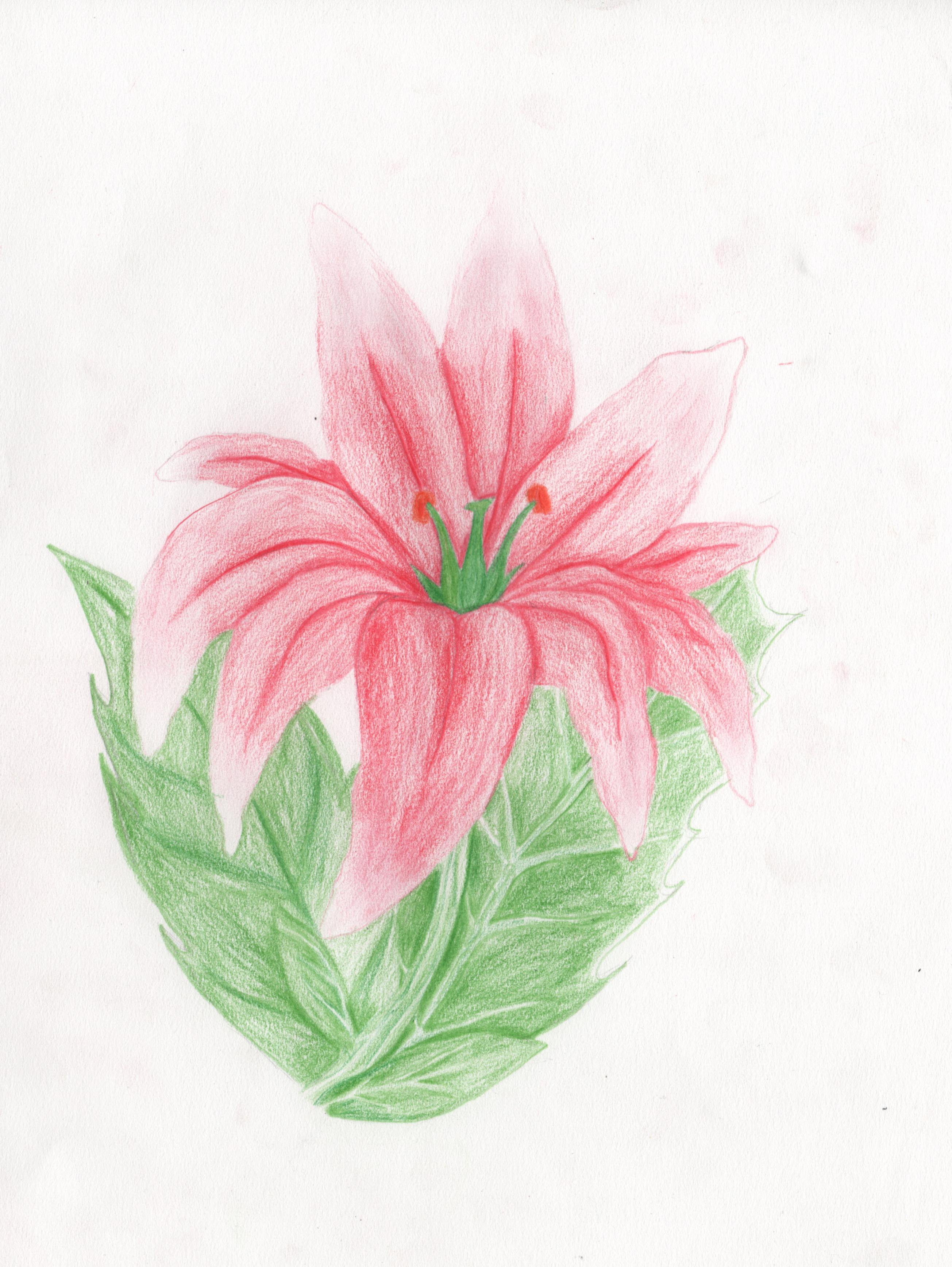 Flower_YannickC_01