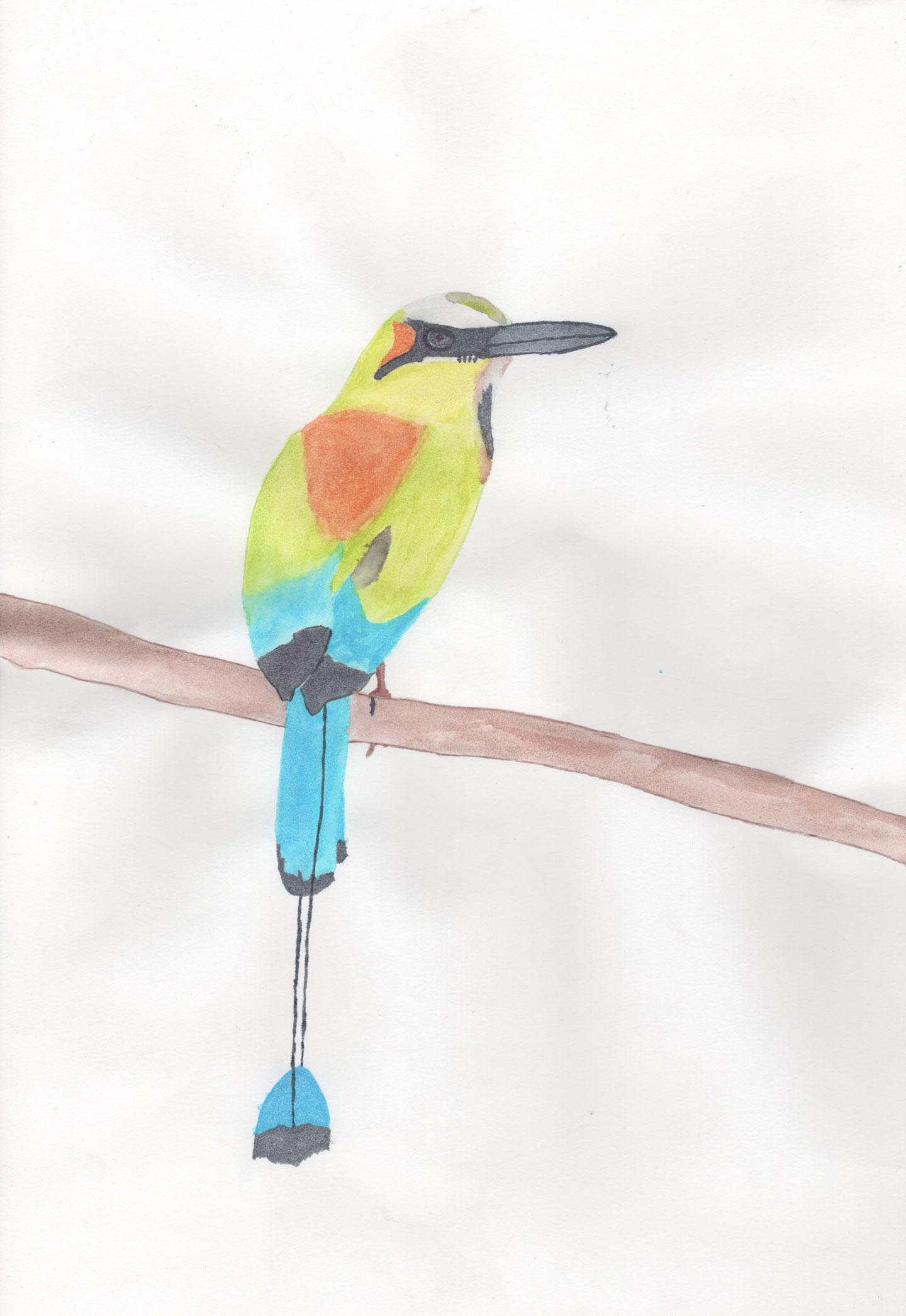 Bird_Ederson_01